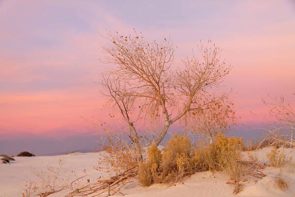Photograph - White Sands Sunset 1 by Liza Eckardt