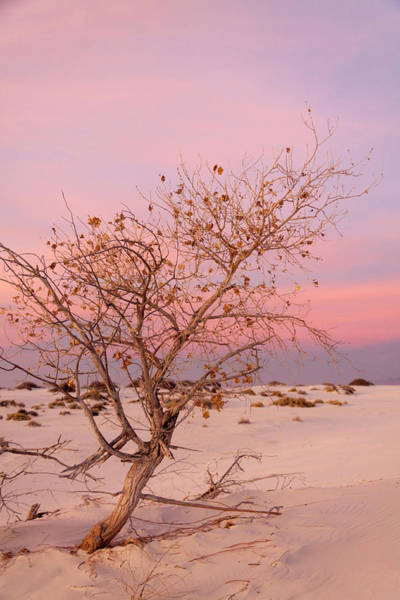 Photograph - White Sands Sunset 2 by Liza Eckardt