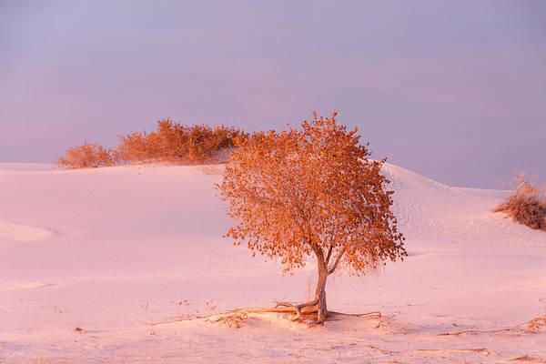 Photograph - White Sands Sunset 4 by Liza Eckardt