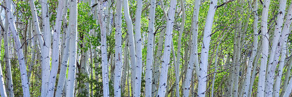 Wall Art - Photograph - White Wilderness Panorama by James BO Insogna