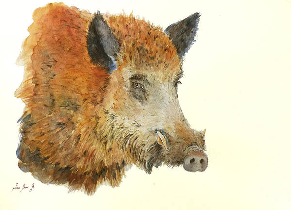 Wall Art - Painting - Wild Boar Watercolor Painting by Juan  Bosco