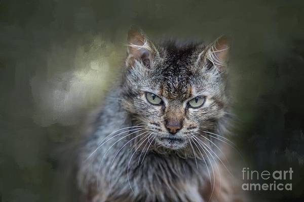 Wild Cat Portrait Art Print