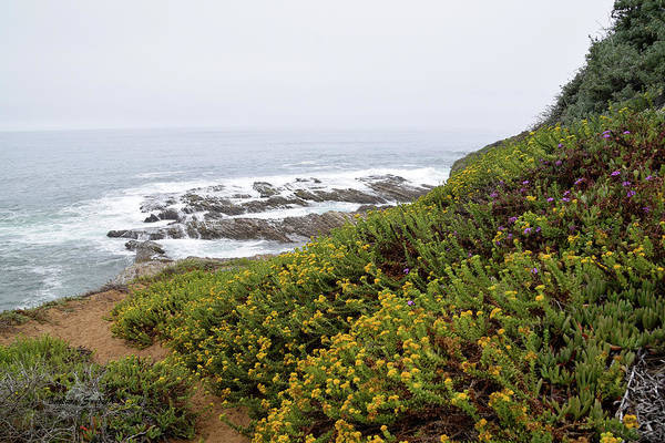 Wall Art - Photograph - Wild Flowers At The Beach Montana De Oro by Barbara Snyder