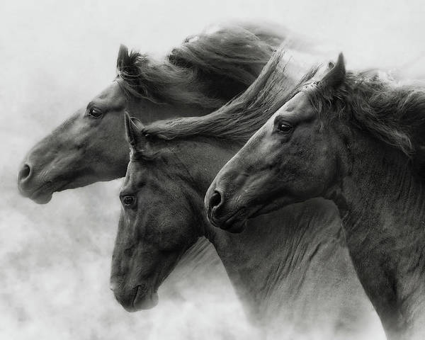Wall Art - Photograph - Wild Hearts by Ron McGinnis