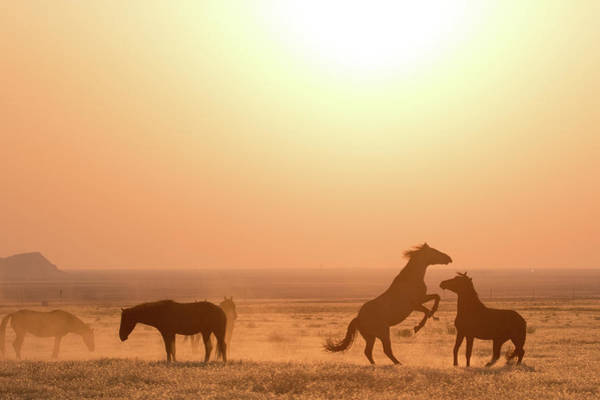 Photograph - Wild Horse Sunset by Wesley Aston
