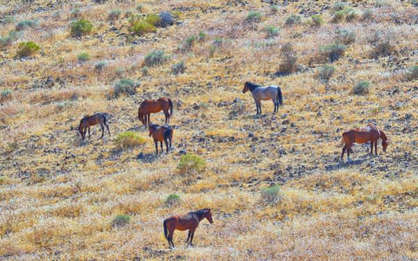 Photograph - Wild Horses by AJ Schibig