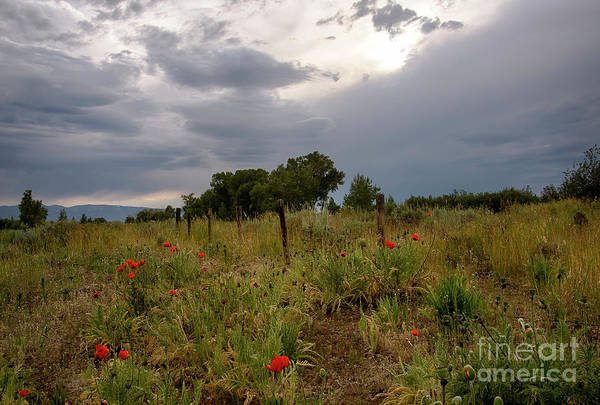 Wall Art - Photograph - Wild Poppies by Idaho Scenic Images Linda Lantzy