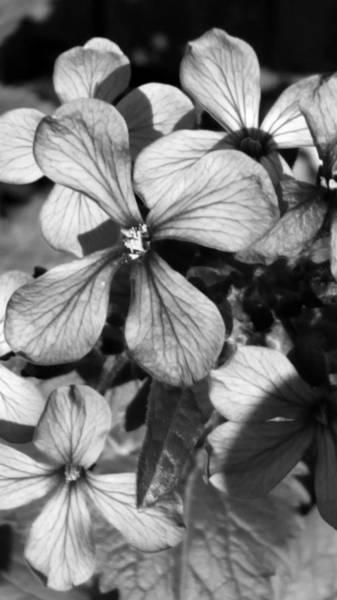 Photograph - Wildflower by Belinda Cox