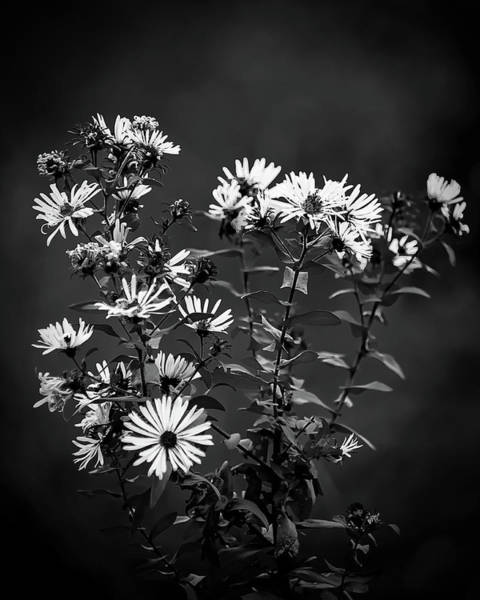 Photograph - Wildflowers by Robert Mitchell