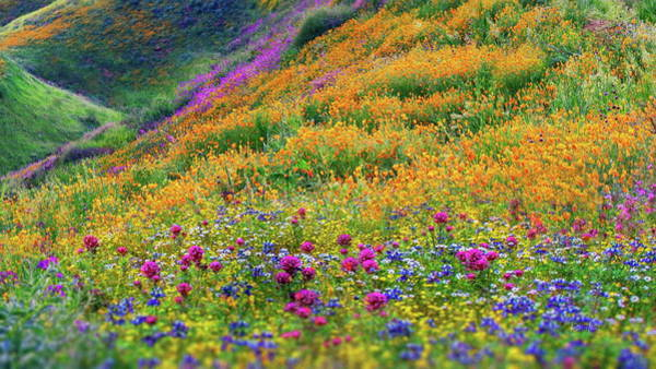 Wall Art - Photograph - Wildflowers by Russ Harris