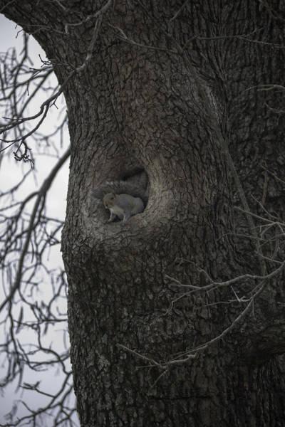 Royal Colony Photograph - Williamsburg Squirrel by Teresa Mucha