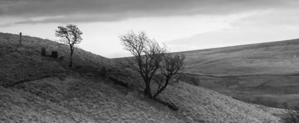 Windswept Photograph - Windswept by Nigel Jones