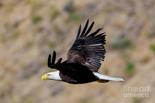 Wall Art - Photograph - Wings Up by Mike Dawson