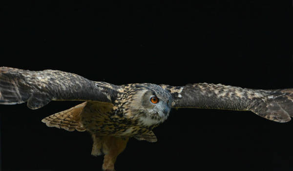 Photograph - Wingspan by Fraida Gutovich