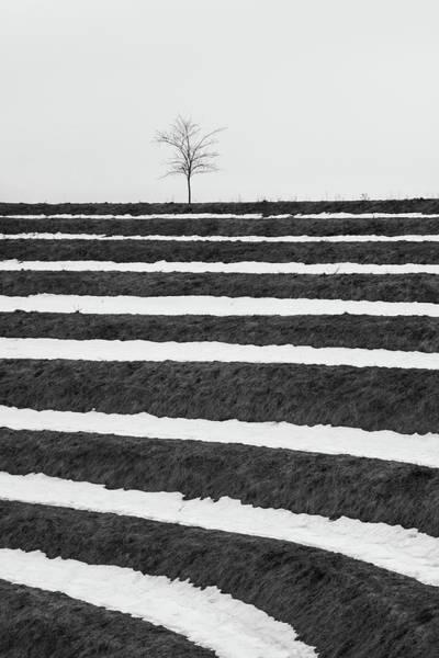 Photograph - Winter Blues by Davor Zerjav