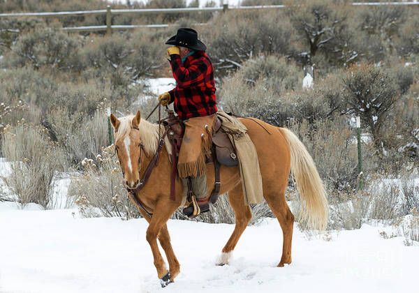 Horseman Wall Art - Photograph - Winter Cowboy by Mike Dawson