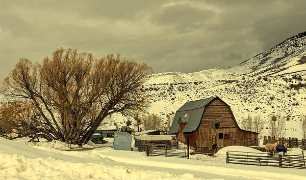 Feedlot Photograph - Winter Farm Scene - Wyoming by L O C