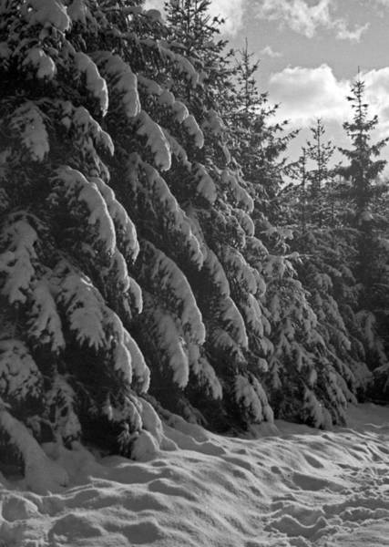 Wintry Photograph - Winter Forest by German School