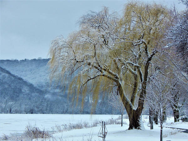 Photograph - Winter Gold by Wild Thing