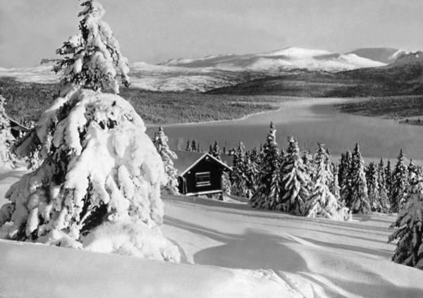 Fallen Tree Photograph - Winter Landscape by German School