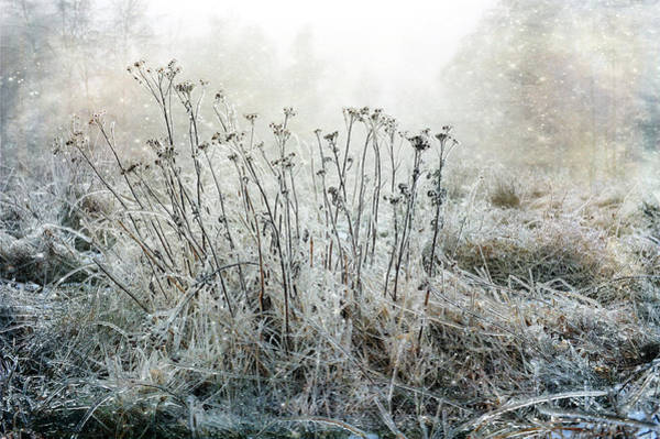 Photograph - Winter Magic by Randi Grace Nilsberg