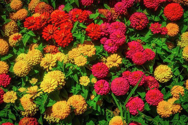 Wall Art - Photograph - Wonderful Dahlia Garden by Garry Gay