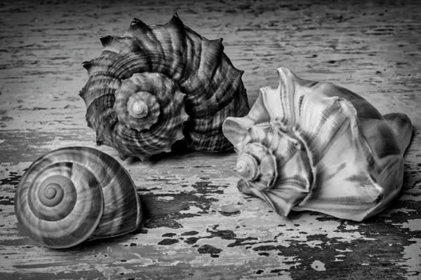 Three Seashells Photograph - Wonderful Shell Still Life by Garry Gay