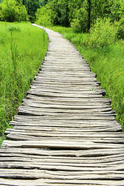 Photograph - Wooden Hiking Trail by Brandon Bourdages