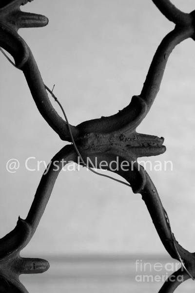 Photograph - X-3 by Crystal Nederman