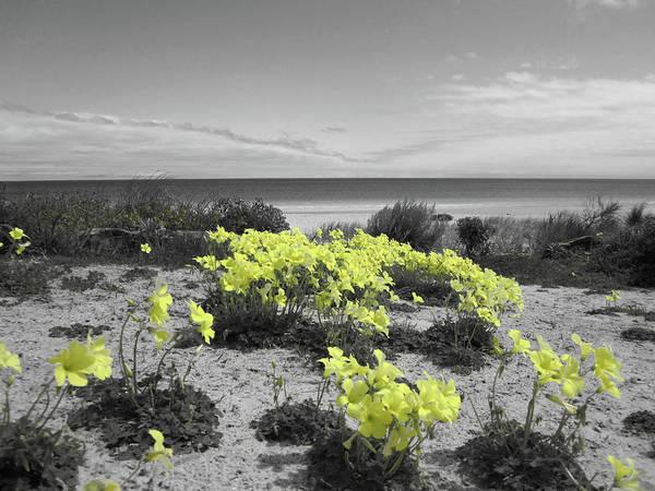Foreshore Photograph - Yellow by Douglas Barnard