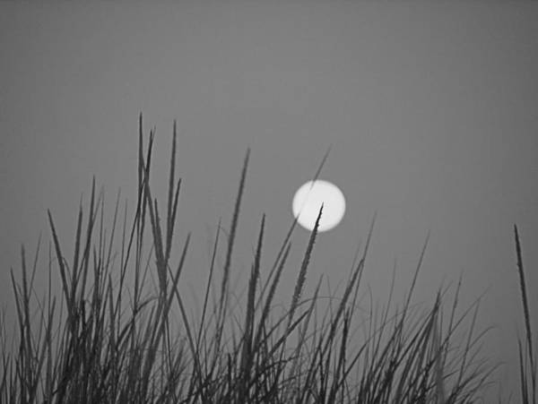 Photograph - Yellow Moon B W by  Newwwman