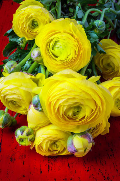 Wall Art - Photograph - Yellow Ranunculus by Garry Gay