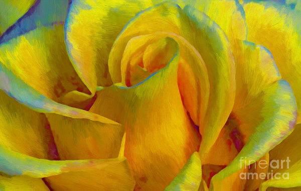 Photograph - Yellow Rose by John  Kolenberg