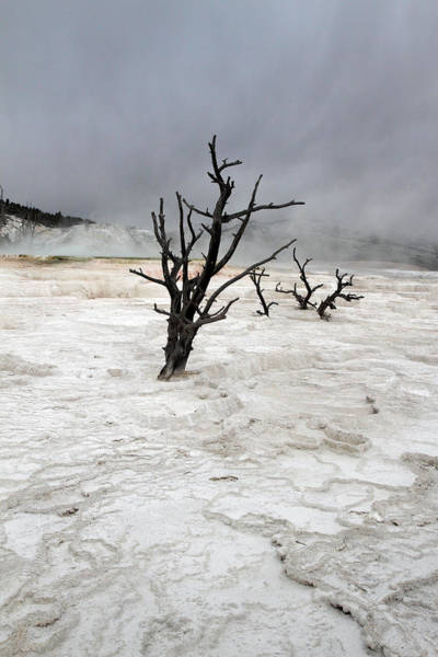 Photograph - Yellowstone Mammoth Hot Springs by Pierre Leclerc Photography