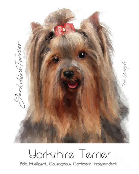 Digital Art - Yorkshire Terrier Poster by Tim Wemple