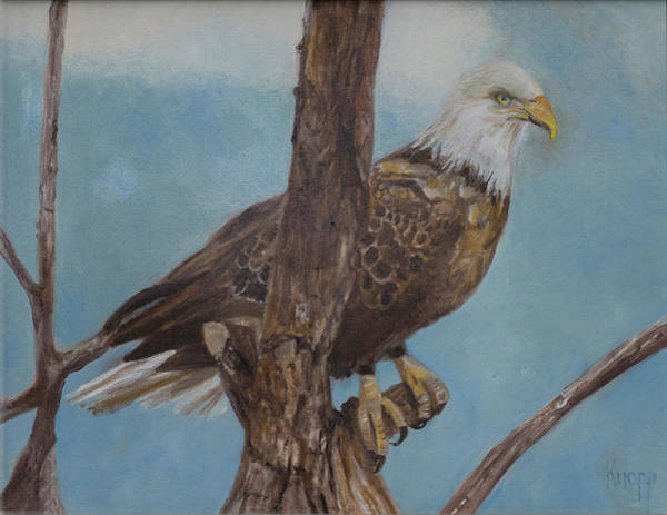 Painting - Young Eagle by Kathy Knopp