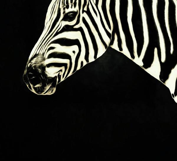 Photograph - Zebra Lines by Alice Gipson
