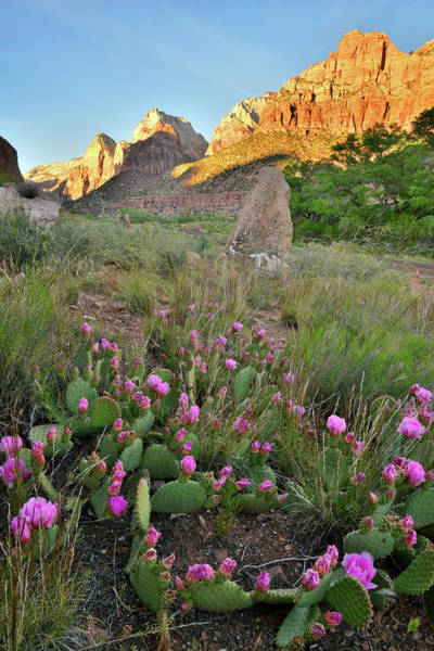 Photograph - Zion Canyon Cacti by Ray Mathis