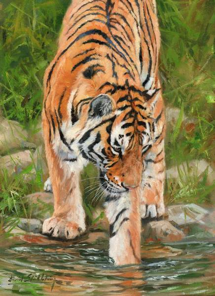 Big Cat Wall Art - Painting - Amur Tiger by David Stribbling