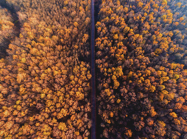Aerial View Photograph - Autumn by Chris Thodd