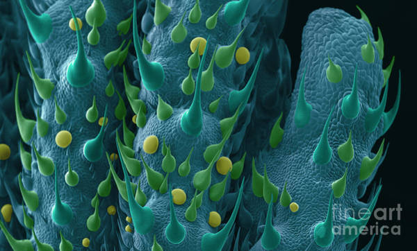 Photograph - Cannabis Leaf Sem by Ted Kinsman