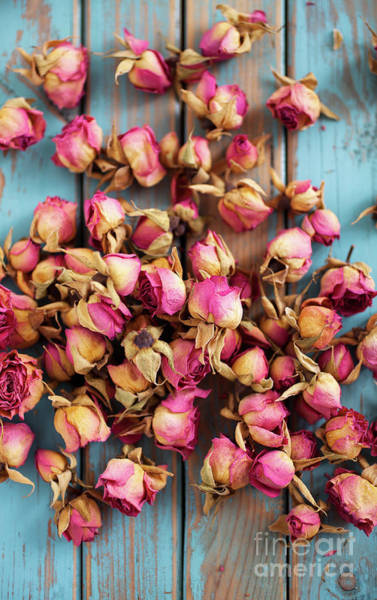Wall Art - Photograph - Dried Roses by Kati Finell