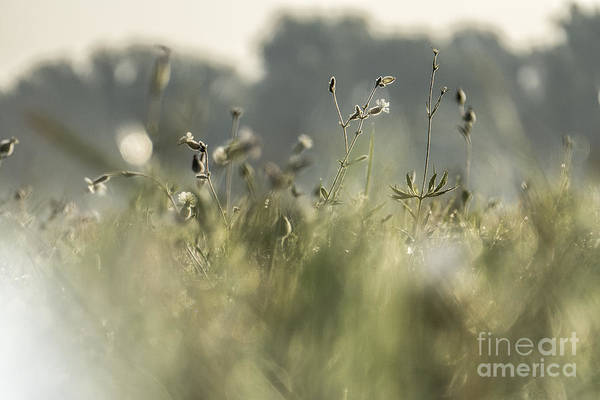 Photograph - Meadow Flowers by Odon Czintos
