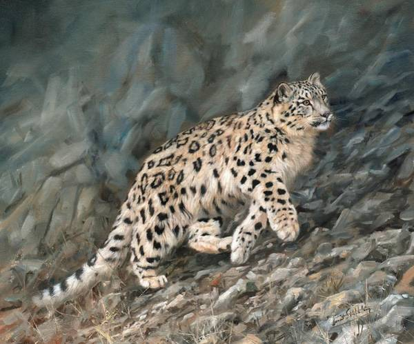 Snow Leopard Wall Art - Painting - Snow Leopard by David Stribbling