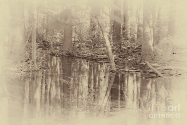 Photograph - 1000 Acre Swamp by William Norton