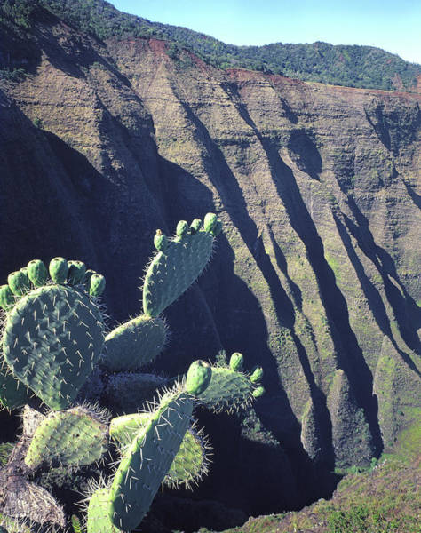 Photograph - 100188 Prickly Pear Cactus Na Pali Coast by Ed Cooper Photography