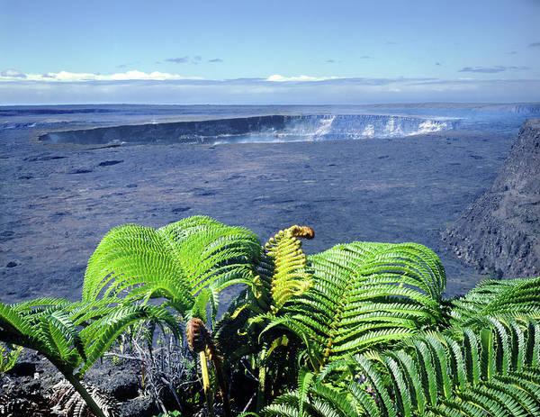Photograph - 100960 Ferns And Halemaumau Crater Kilauea Caldera Hi by Ed Cooper Photography