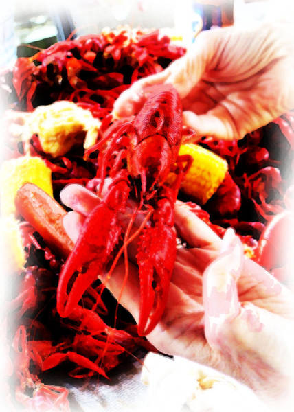 Digital Art - 102715 Louisiana Lobster by Garland Oldham