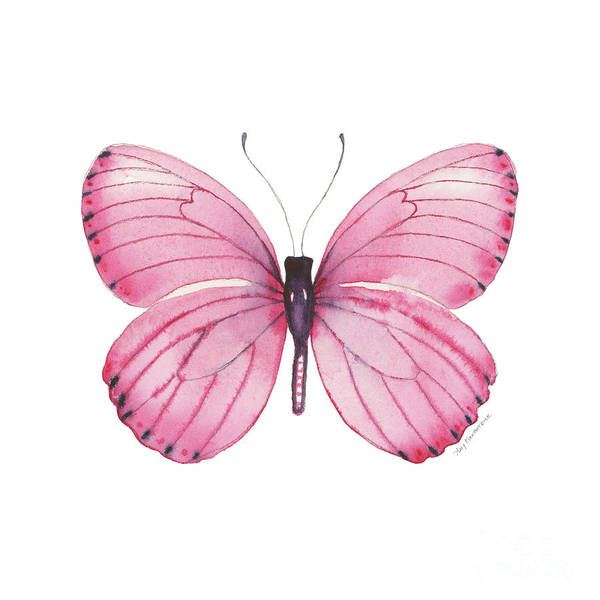 Wall Art - Painting - 106 Pink Marcia Butterfly by Amy Kirkpatrick