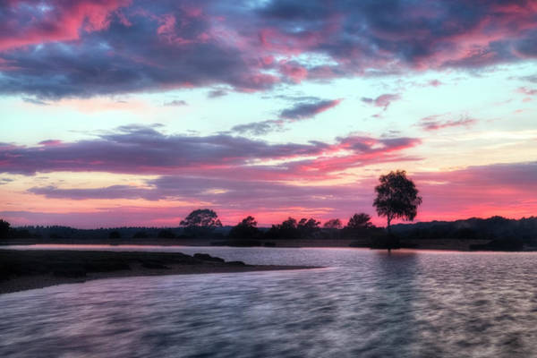 Mare Photograph - New Forest - England by Joana Kruse